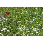 Blumenwiesen/Kräuter/Gemüse