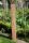 Wildbienenhotel Stamm Eiche 75cm