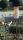 Erdspiess 50cm schwarz