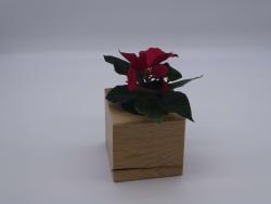 Pflanzwürfel Cube
