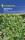 Basilikum feinblättrig, einjährig, Kiepenkerl