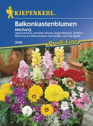 Balkonkastenblumen Mischung, Kiepenkerl