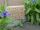 Insektenhotel Wildbienen Dino Drache Massivholz